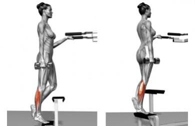 musculo biceps funcion yahoo dating