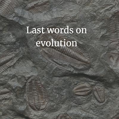 Last words on evolution