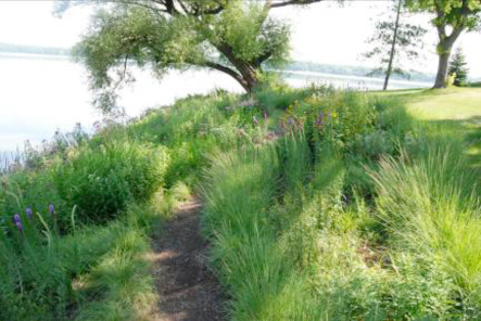Restoring The Landscape With Native Plants: Lets go where ...