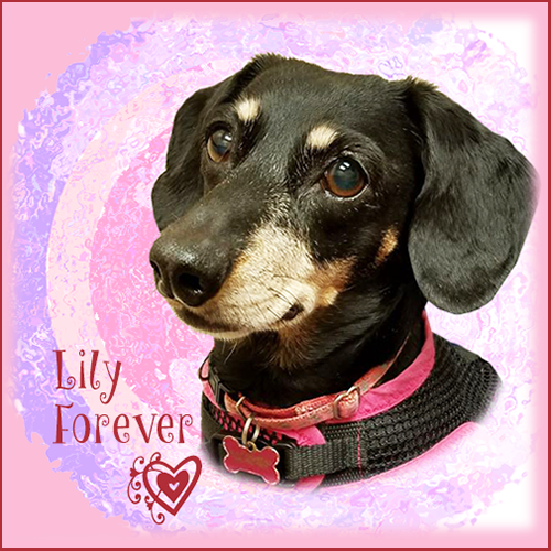 Lily Belle Forever