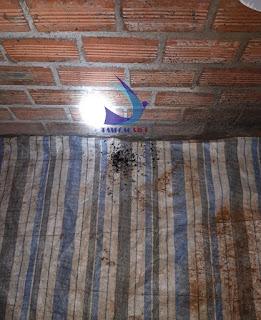 Dấu phân của chim yến trong nhà sau hơn 1 tháng vận hành