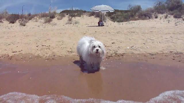 La playa para el maltes