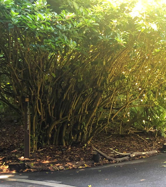 Visite du jardin botanique de San Francisco