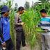 Bebas Penggunaan Bahan Kimia, Sayuran BPPUT Perusahaan Sukanto Tanoto Raih Sertifikat Prima 3