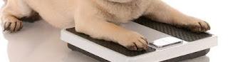 Algunos datos divertidos sobre la obesidad canina