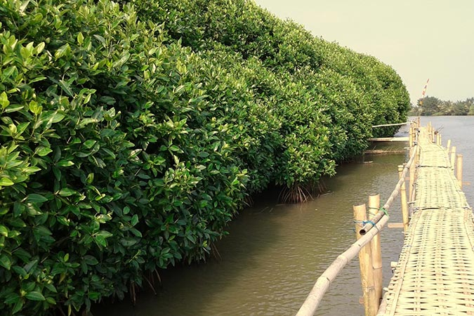 Dlium Wana Tirta Mangrove Forest
