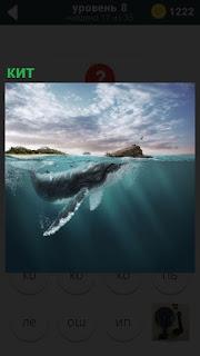 Из воды появился кит, но только небольшая его часть, в виде головы