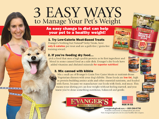 3 Easy Ways to Help Your Pet to a Healthy New Year