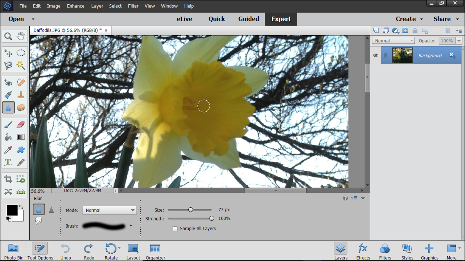 photoshop elements 2018 free download full version