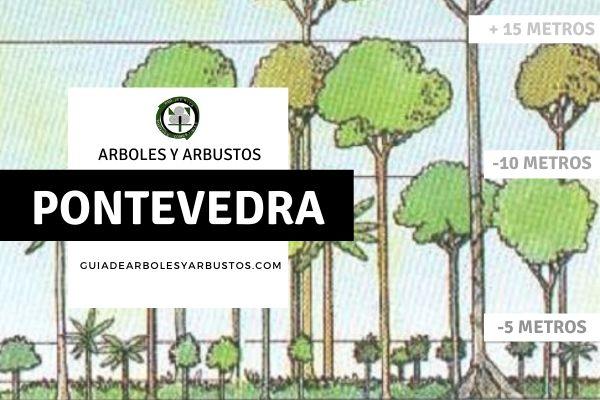 Arboles y arbustos de la provincia de Pontevedra