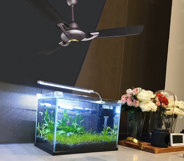 How does a ceiling fan cool fish tank water in summers?