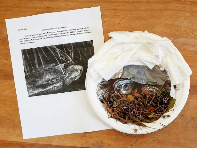 a child's essay and collage about what a turtle does during the winter
