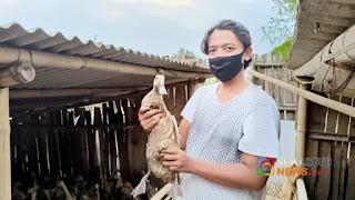 Bripka Ricky Ardiansyah sukses beternak bebek