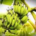 जिले में फलदार पौधा रोपाई का लक्ष्य निर्धारित, फलदार पौधे लगाने वाले किसानों को 50% अनुदान