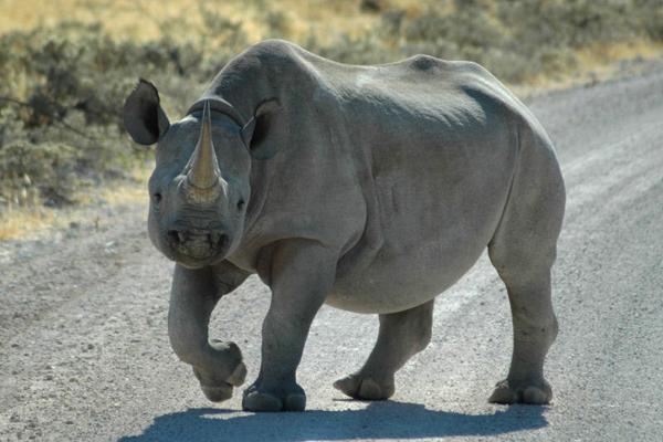 Taleni Etosha Village Namibia wildlife