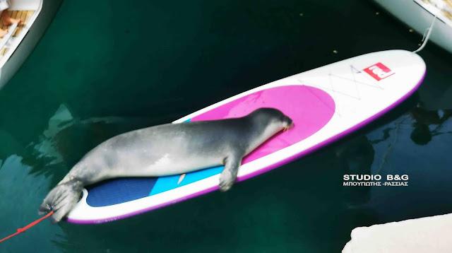 Μια φώκια ξετρελένει μικρούς και μεγάλους στην Αλόννησο