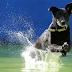 ►campeonato de saltos de cachorros