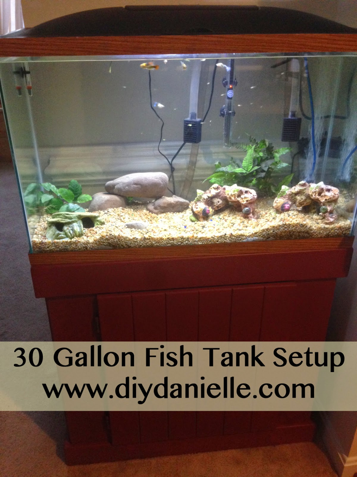 30 gallon fish tank setup diy danielle for How many fish in a 20 gallon tank
