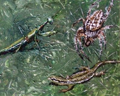 insectes peints par Karine Babel artiste peintre à Périgueux