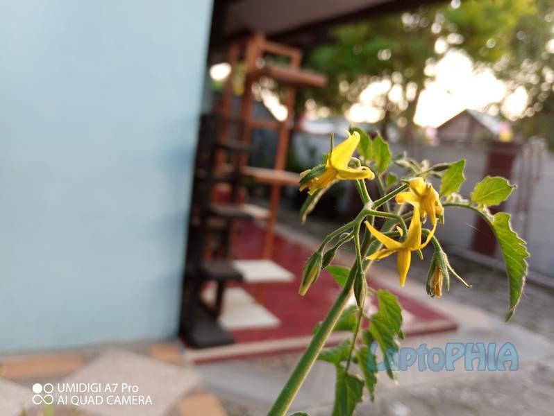 Hasil Foto Kamera Umidigi A7 Pro