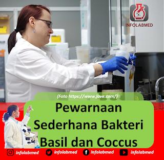 Pewarnaan Sederhana Bakteri Basil dan Coccus