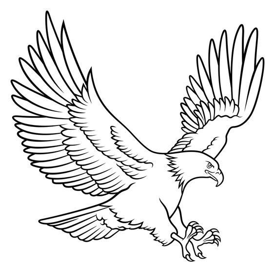 Sketsa gambar burung elang