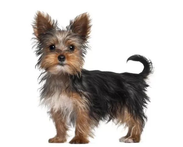 Follow 10 of the most famous and best types of dogs in the world with pictures | cat and dogs