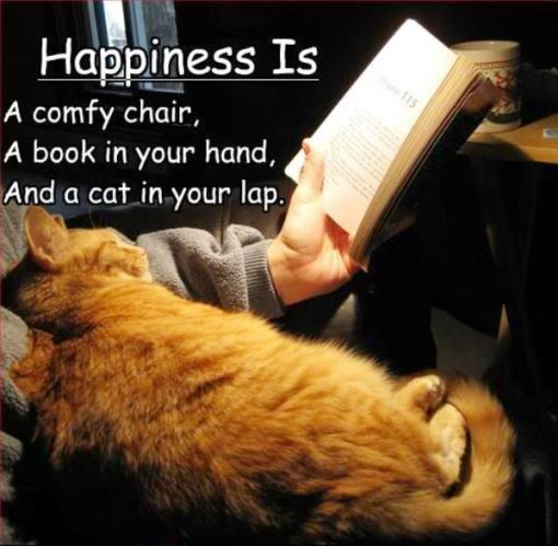 a cat in your lap