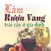 Làm rượu vang trái cây ở gia đình - Vũ Công Hậu