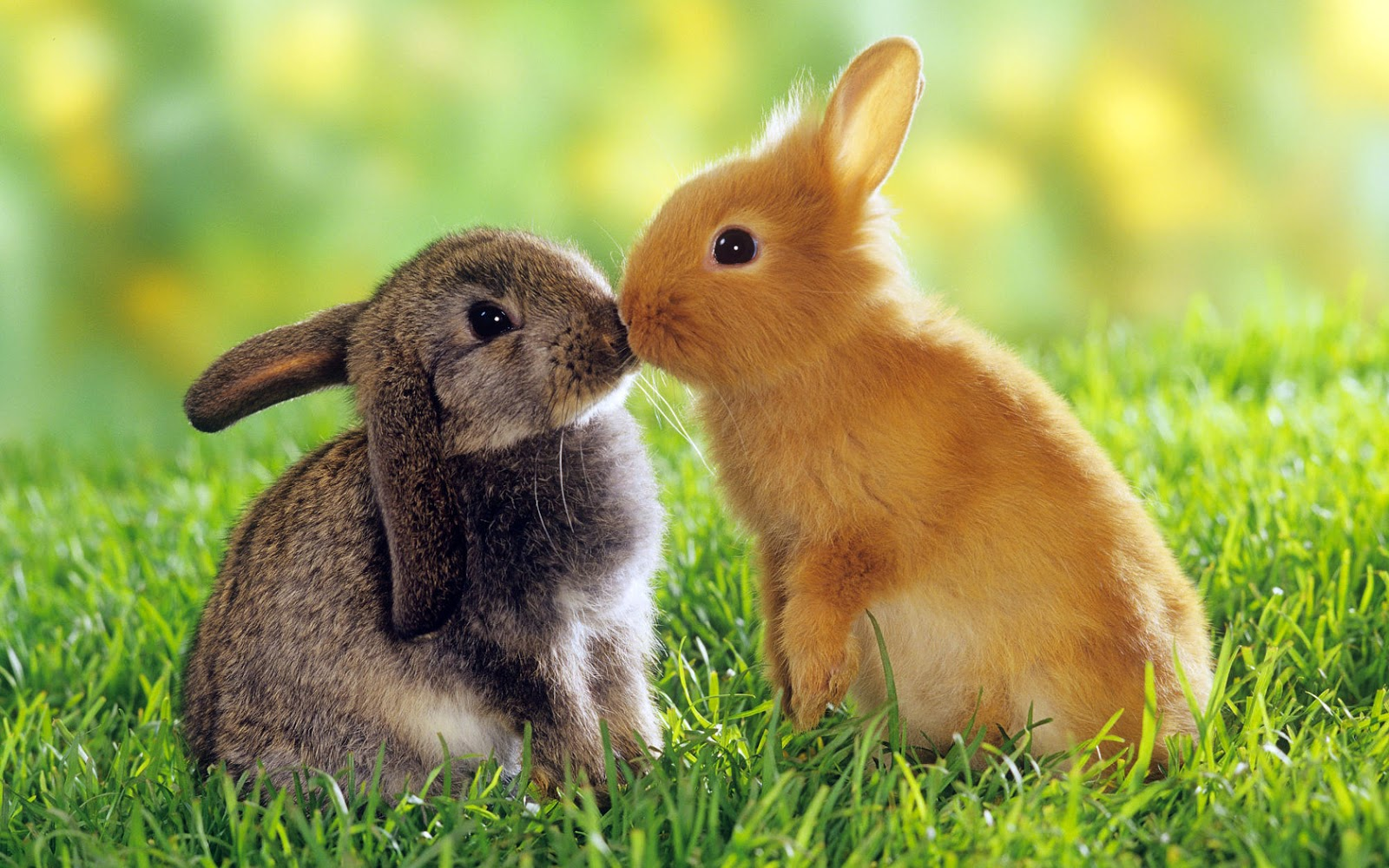 animal funny sweet animals cute latest loving bunny adorable lovers pets wallpapers romantic loved cutest lovely baby couples many different