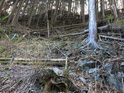倒木がいっぱい