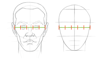 Head proportions chart: The width of the eye is about one fifth the width of the head.