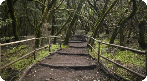 Bosque encantado. Parque Nacional de Garajonay. La Gomera