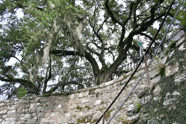 Spanish moss on oak trees in Savannah, GA | The Lowcountry Lady