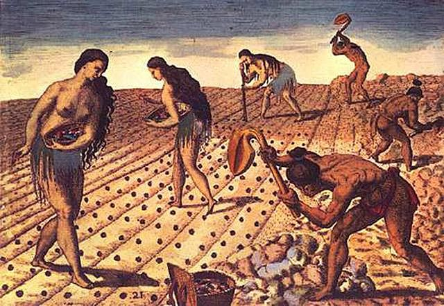 Population boom preceded early farming in North America