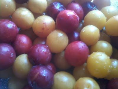 raccolta frutta biologica gratis