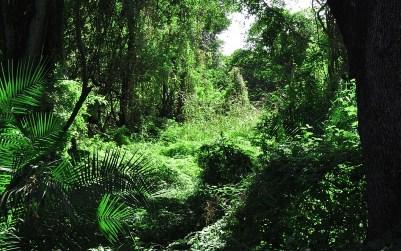 A párducemberek dzsungele