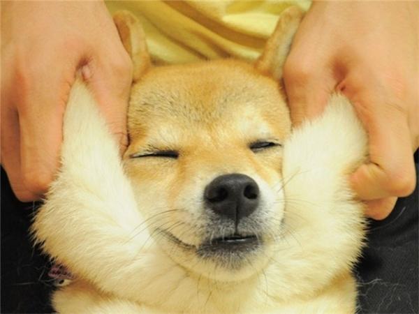 Vào mà xem mặt lũ cún cưng khi bị chủ bẹo má này
