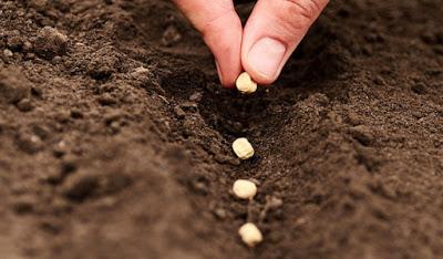 Βασική αρχή συλλογής σπόρων