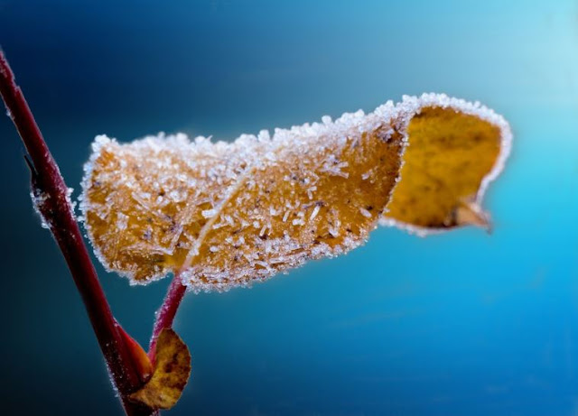 Spring, Winter season | Disease | Problems | Solution