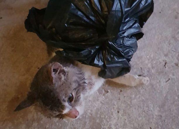 Φρίκη στο Άργος: Πέταξαν στα σκουπίδια γατάκια κλεισμένα σε σακούλες