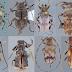 Oito novas espécies de insetos são descobertas no Espírito Santo