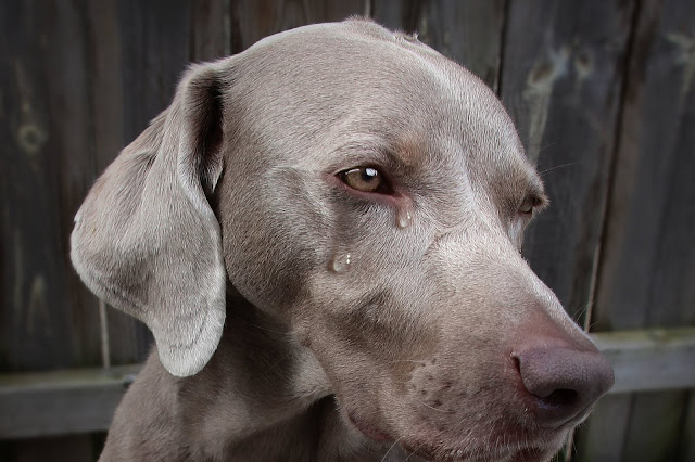 Why Is My Dog Crying At Night? What Are The Causes And What To Do