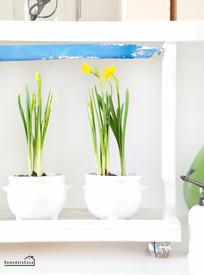 Spring decor and projects