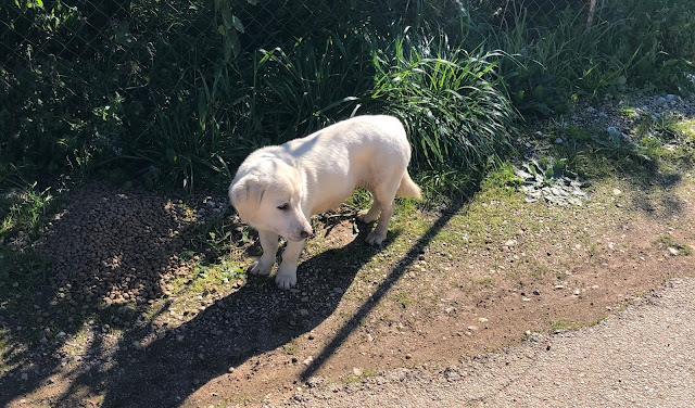 Χαρίζονται μικρόσωμα σκυλάκια στο Άργος