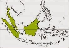 Raffle´s malkoha Rhinortha chlorophaea