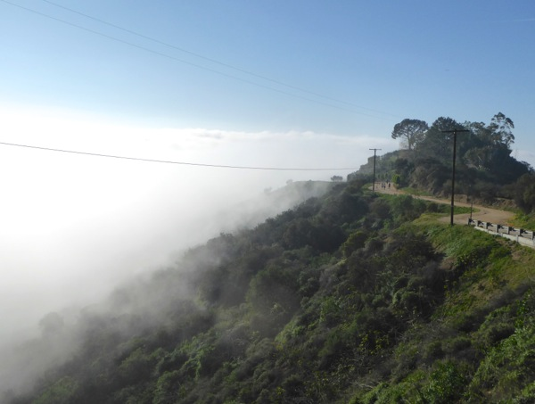 Misty morning Runyon Canyon