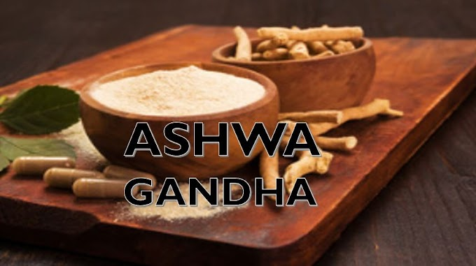 How does ashwagandha improves our body immune system ?