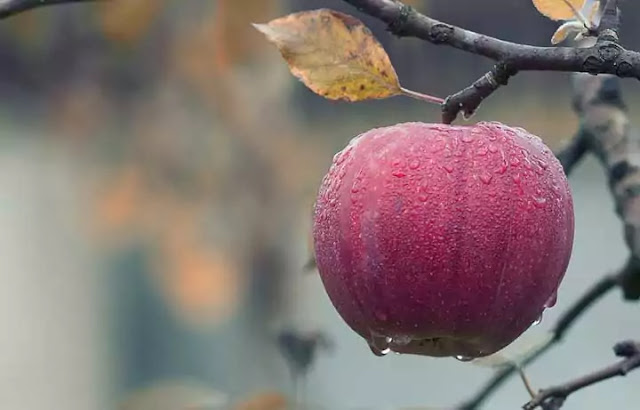 Nutrients of an apple, Benefits and Side effects