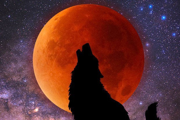 super blood wolf moon montage with night sky and starlit background with silhouette of a wolf howling in front of the blood moon
